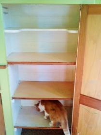 Cat Pantry.